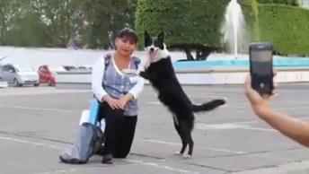 Cachorro Não Pode Ver Ninguém Tirando Foto, Que Ele Invade Para Sair Também!