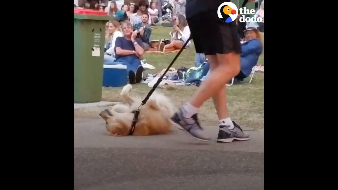 Cachorro não quer ir embora pára casa, veja o que ele faz para não ir!!!