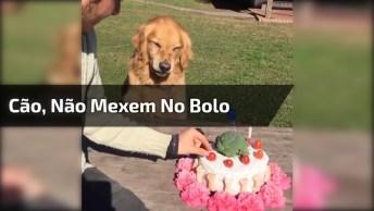Cachorro Não Quer Que Mexam Em Seu Bolo De Aniversário, Veja Como Fica Bravo!