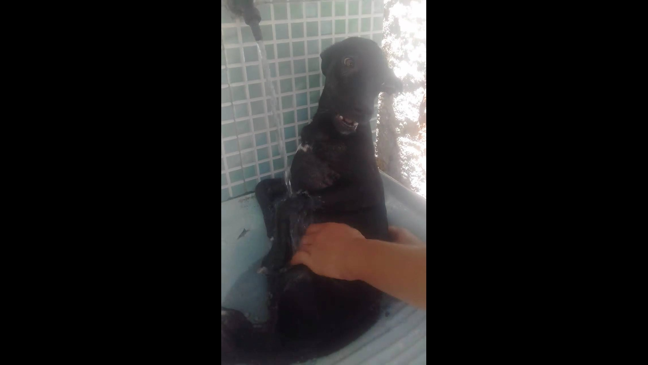 Cachorro não quer sair do banho