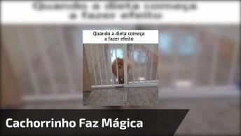 Cachorro Passa Por Vão Pequeno, Nem Parecia Que Ia Dar Certo Hahaha!