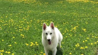 Cachorro Passeando Em Linda Estrada Na Suíça, Que Lugar Lindo!
