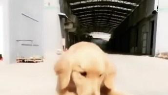 Cachorro Pedalando Em Sua Bicicleta E Andando De Skate, Que Esperto!