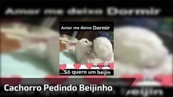 Cachorro Pedindo Beijinho Para Seu Amor, Que Casal Mais Fofo!