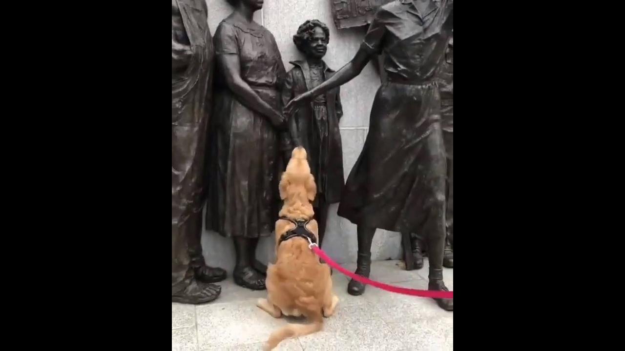 Cachorro pedindo carinho para família de estátuas