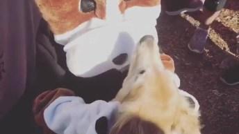 Cachorro Pedindo Carinho Para Mascote, Uma Cena Rara E Fofa!