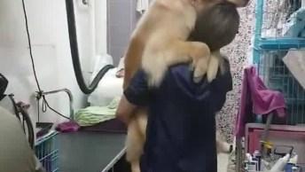Cachorro Pedindo Colo Para Moça Do Pet Shop, Olha Só A Carinha Dele!