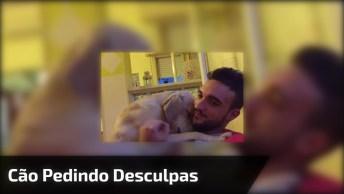 Cachorro Pedindo Desculpas Para Seu 'Papai', Que Coisa Mais Linda!