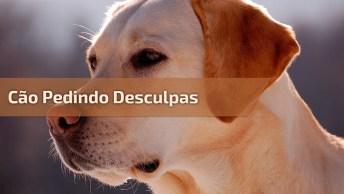 Cachorro Pedindo Desculpas Por Ter Feito Xixi Dentro De Casa!