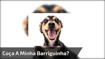 Cachorro Pedindo Para Que Cocem A Barriga Dele, É Muita Ousadia Né!