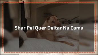 Cachorro Pedindo Pra Deita Com A Mamãe, Olha Só A Carinha Dele Que Fofo!