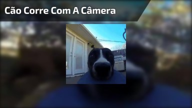 Cachorro Pega Câmera E Sai Correndo, Ele Não Sabia Que Estava Sendo Filmado!