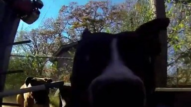 Cachorro Pega Câmera Na Boca E Sai Correndo, Filmando Tudo!