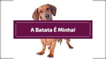 Cachorro Pega O Saco De Batata E Foge Hahaha, Ninguém Tira Dele!