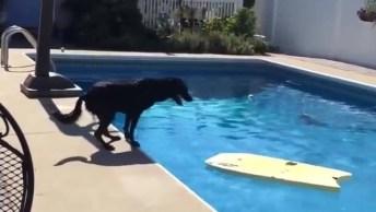 Cachorro Pega Prancha Na Piscina Para Poder Apanhar A Bola, Olha Só Que Esperto!