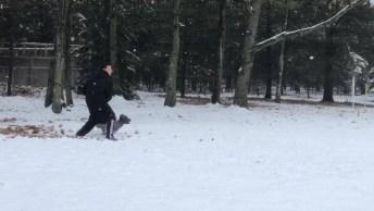 Cachorro Pegando Disco No Ar, Mais Um Cão Esperto Para Compartilhar!