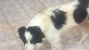 Cachorro Pegando Petisco No Ar, Um Vídeo De Cachorro Esperto!
