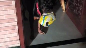 Cachorro Pego No Flagrante Com Uma Bola Murcha Na Boca, Será Que Foi Ele?