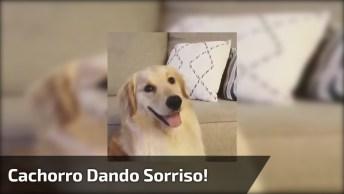 Cachorro Percebe Que Esta Sendo Observado E Da Um Belo Sorriso!