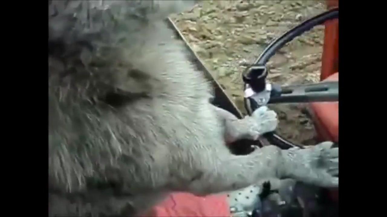 Cachorro pilotando caminhão, que bichinho esperto gente!