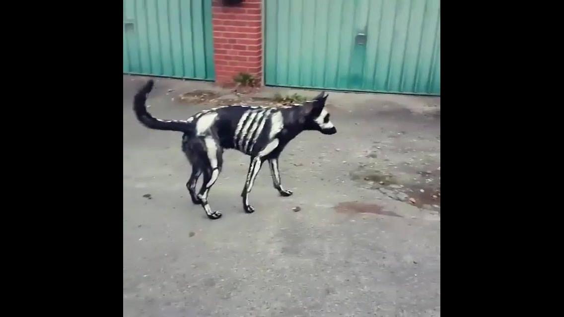 Cachorro pintado para o Halloween