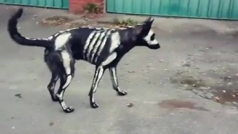 Cachorro Pintado Para O Halloween, Com Certeza Ele Vai Assustar Muita Gente!