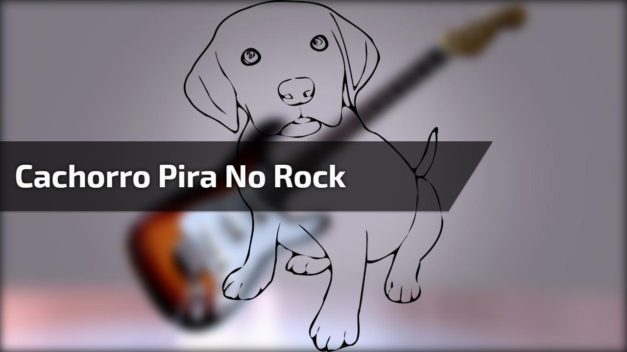 Cachorro pira no Rock