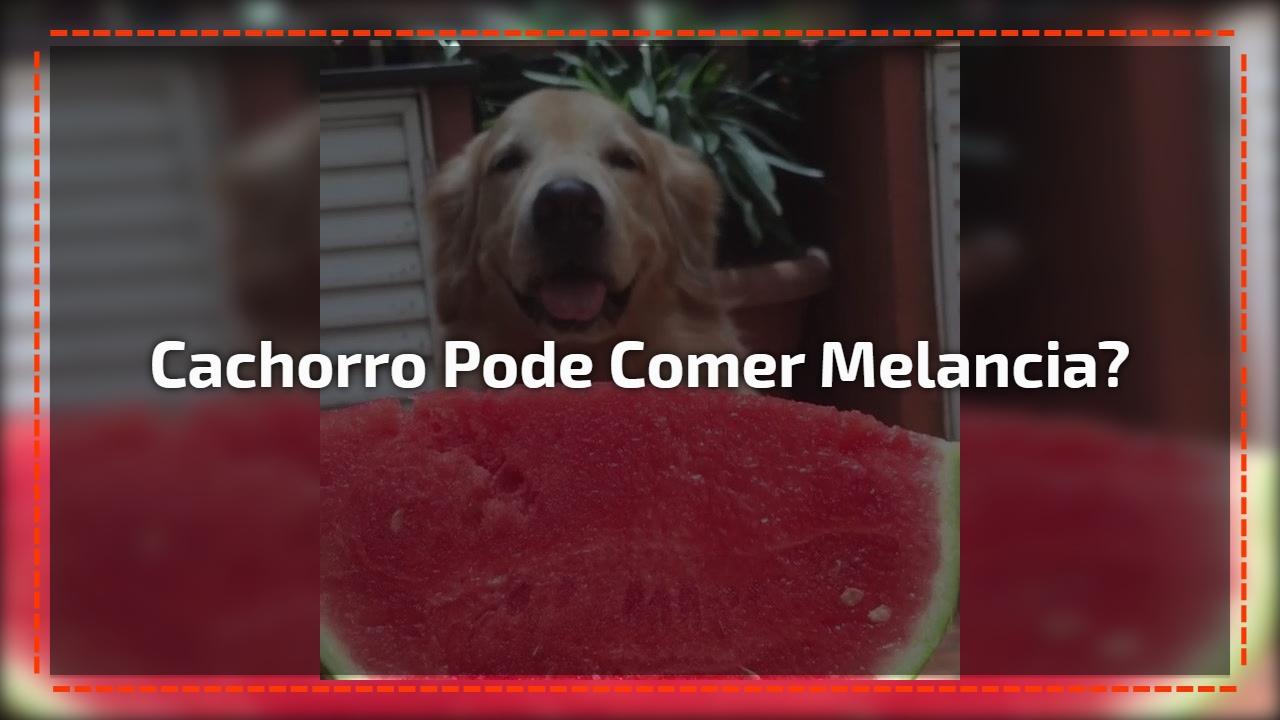 Cachorro Pode Comer Melancia?