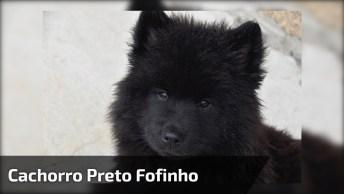 Cachorro Preto Fofinho, Olha Essa Carinha, Quem Resiste A Ela?