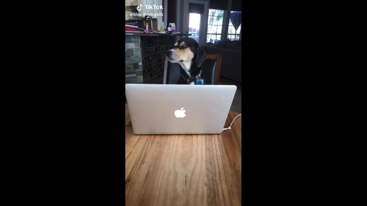 Cachorro procurando namorada na internet hahaha