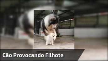 Cachorro Provocando Filhote, Veja Que Cena Engraçada E Compartilhe!