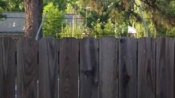 Cachorro Pula Alto Para Ver O Que Tem Atrás Da Cerca, Que Curioso Hein!