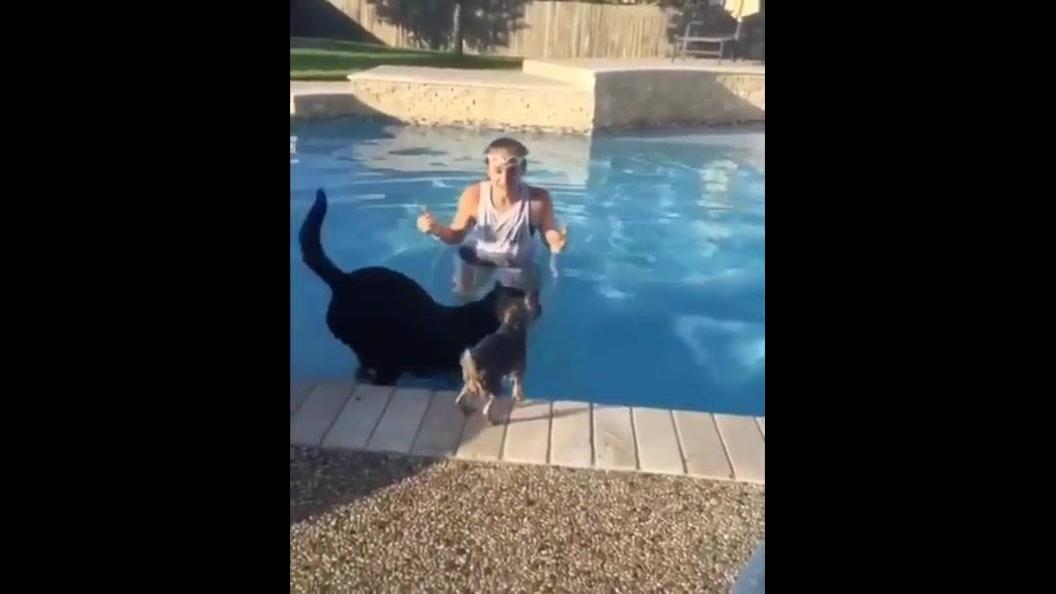 Cachorro pula na piscina e amiguinho pula em suas costas