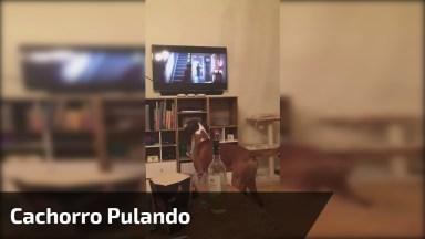 Cachorro Pulando Igual Ao Cachorro Do Filme Que Esta Assistindo!
