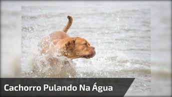 Cachorro Pulando Na Água Para Salvar O Humano, Ele É Um Herói!