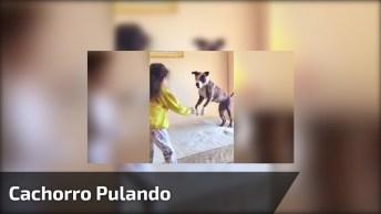 Cachorro Pulando No Colchão Igual Uma Criança, Que Fofura!