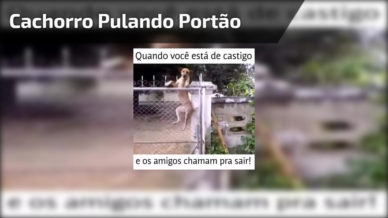 Cachorro pulando portão