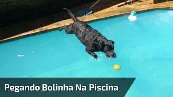 Cachorro Puxa Prancha Na Piscina Só Para Poder Pegar Sua Bolinha!