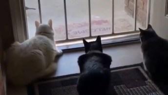 Cachorro Quase Mata Gatos De Susto, Para Rir Muito E Compartilhar!