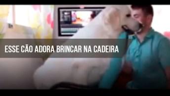 Cachorro Que Adora A Cadeira Do Computador Do Papai, Confira!