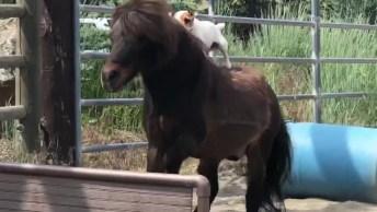 Cachorro Que Adora Andar A Cavalo, Que Coisa Mais Fofa, Confira!