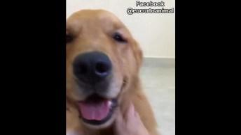 Cachorro Que Adora Carinho, Olha Só Como Ele Fica Bravo Quando Para!