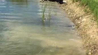 Cachorro Que Adora Nadar No Lago, Olha A Alegria Desse Cão!