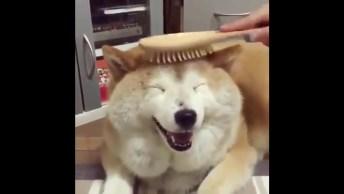 Cachorro Que Adora Que Seus 'Cabelos' Sejam Penteados, Olha Essa Carinha!