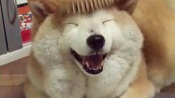 Cachorro Que Adora Ser Penteado, Olha A Carinha Deste Ser, Que Coisa Linda!