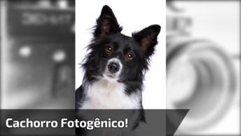 Cachorro Que Adora Tirar Fotos, Você Vai Amar Esse Cão!