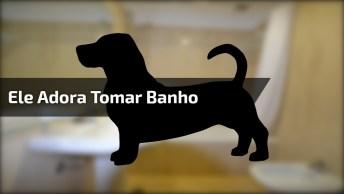 Cachorro Que Adora Tomar Banho, Veja Como Ele Fica Feliz!
