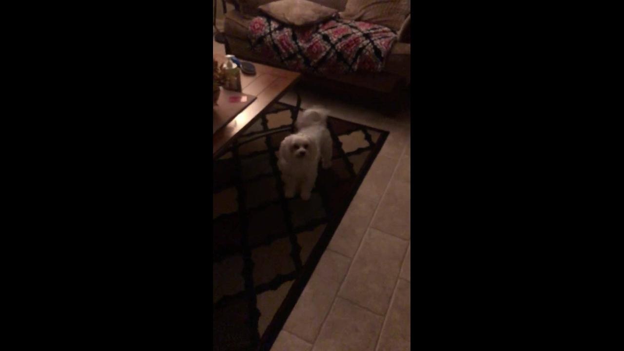 Cachorro que branco a cabeça para ganhar um petisco