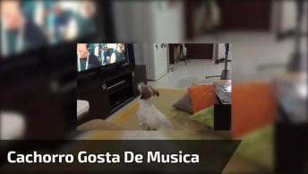 Cachorro Que Gosta De Despacito, Até Os Cães Adoram Essa Música Contagiante!