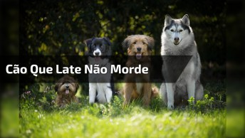 Cachorro Que Late Não Morde, Será Verdade Isso? Veja A Cena!